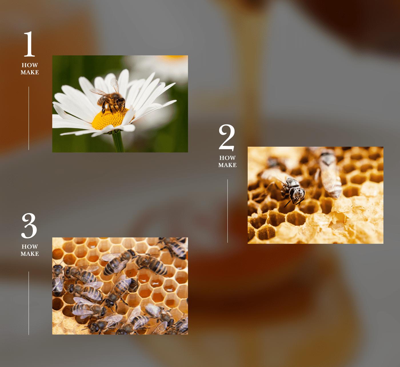 100% 토종 천연 벌꿀, DMZ 철원 숙성 아카시아 꿀 상세이미지9 - 어떻게 만들어졌나요