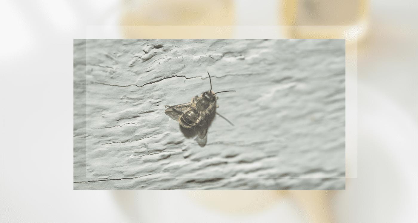100% 토종 천연 벌꿀, DMZ 철원 숙성 아카시아 꿀 상세이미지7 - 건강한 꿀 만들기