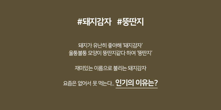 event배너2-돼지감자 인기의 이유는?