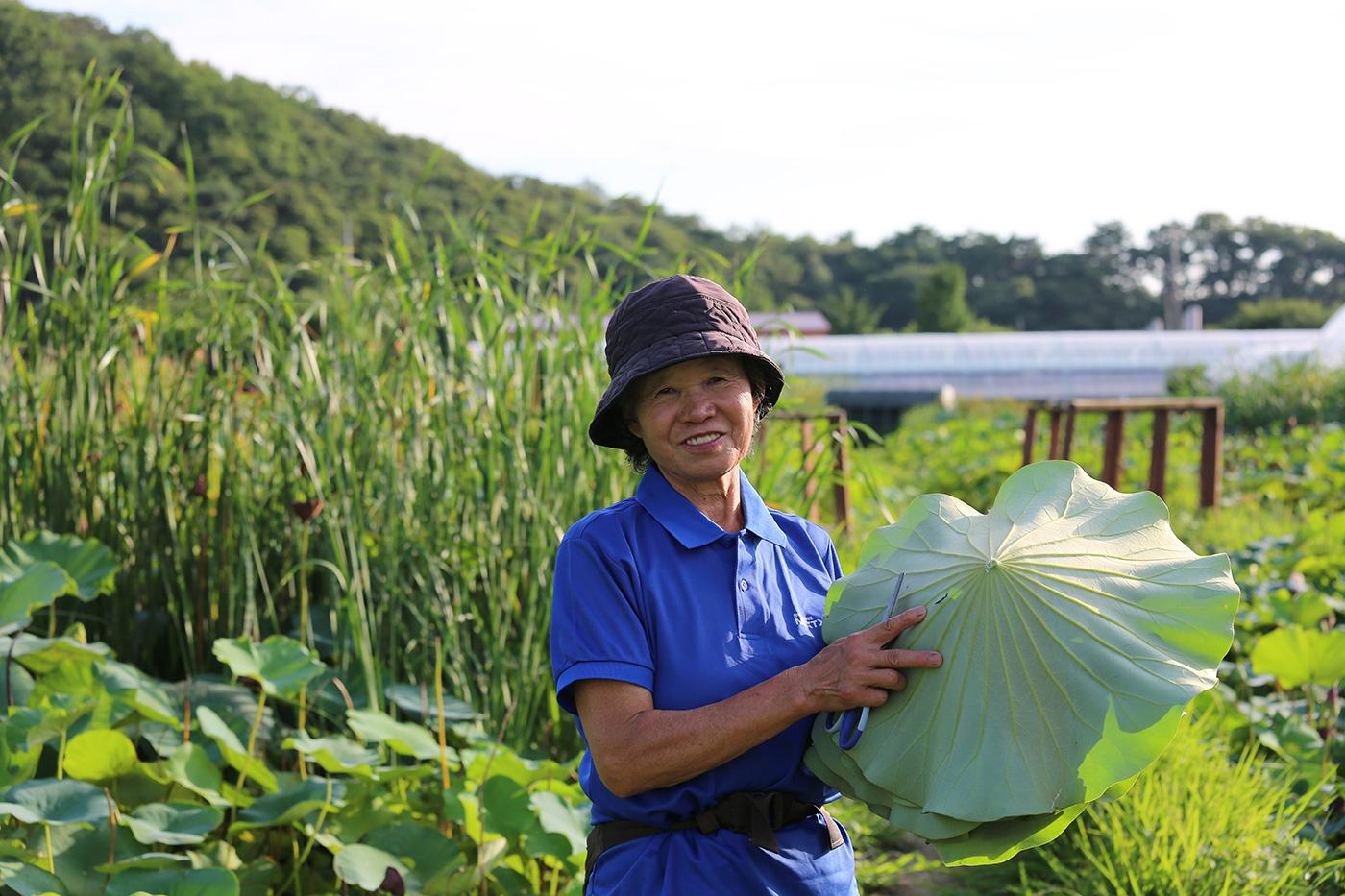 국산 무농약 수제 생연잎 찰밥 (230g*12개) 상세이미지1