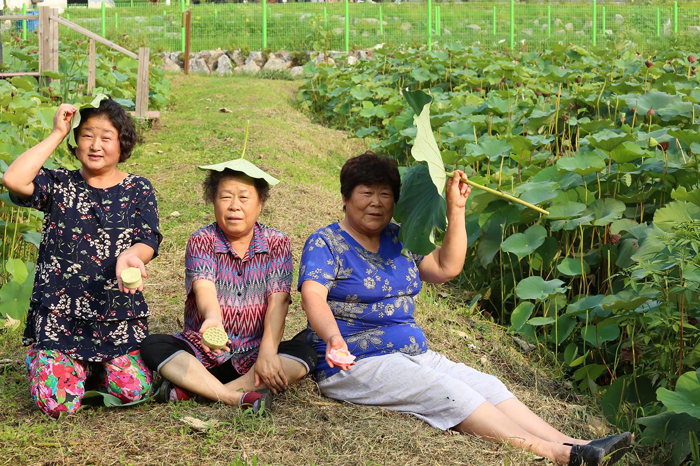 국산 무농약 수제 생연잎 찰밥 (230g*12개) 상세이미지5