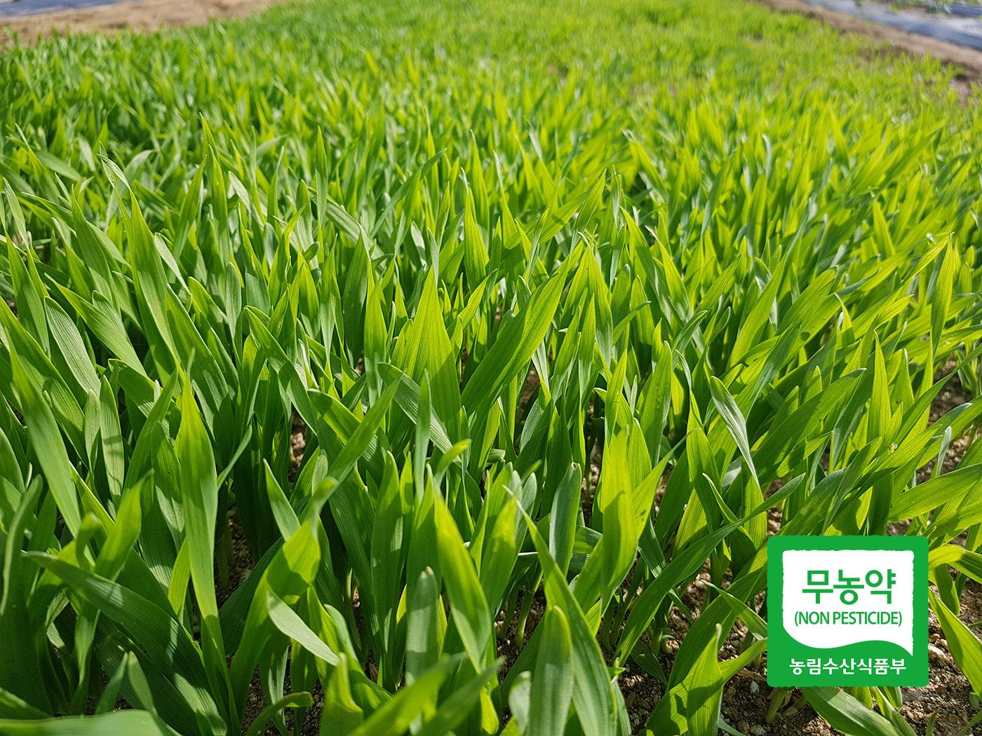 무농약 새싹보리 분말 스틱(30포/60포) 상세이미지2