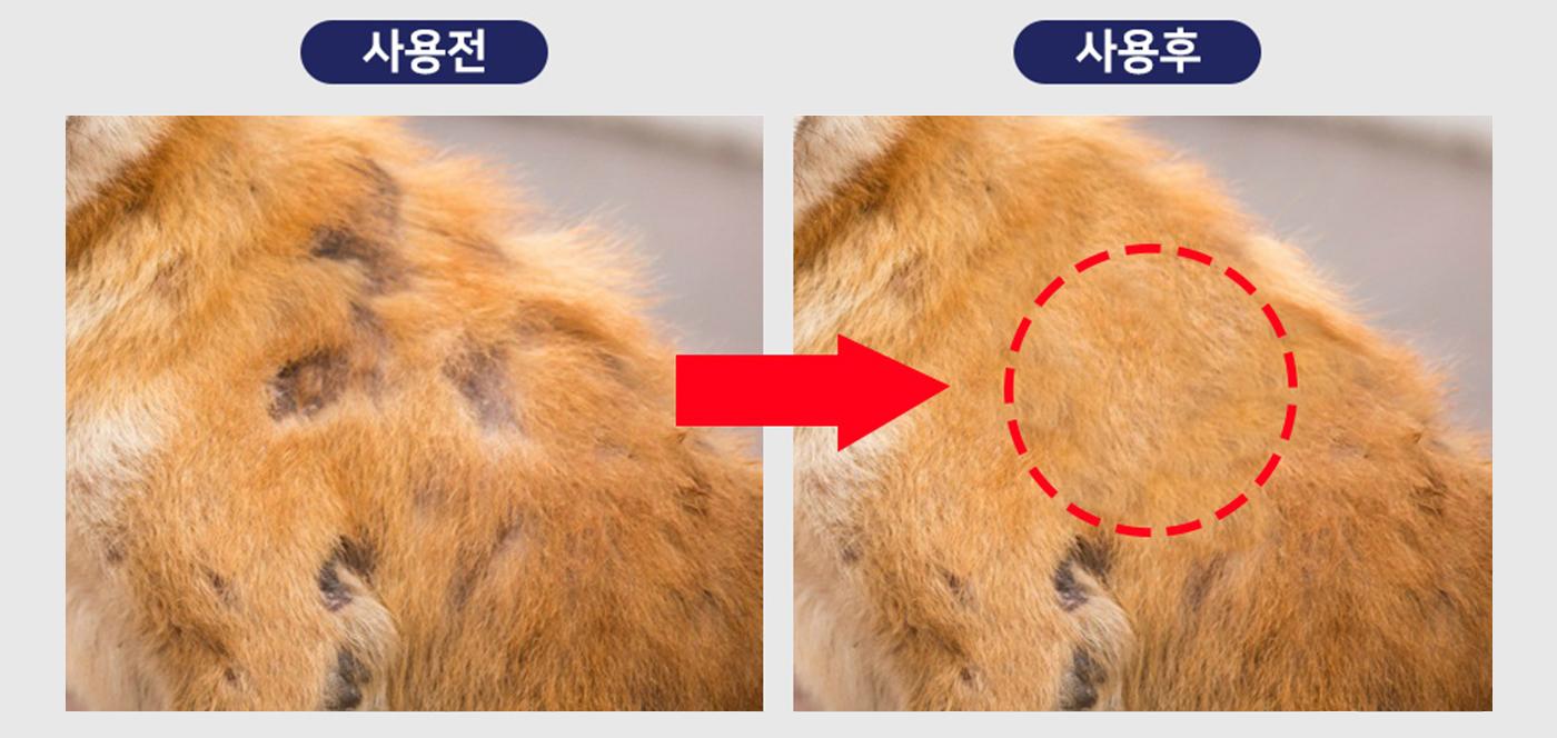강아지 피부&모질 케어 농축 파우더 곤충 영양제(한달분) 상세이미지12