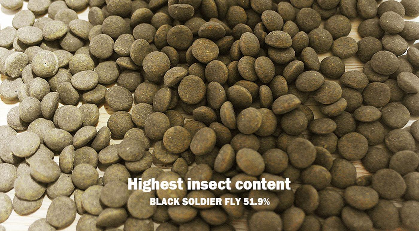 강아지 동애등에 곤충사료(200g*10ea) 상세이미지3