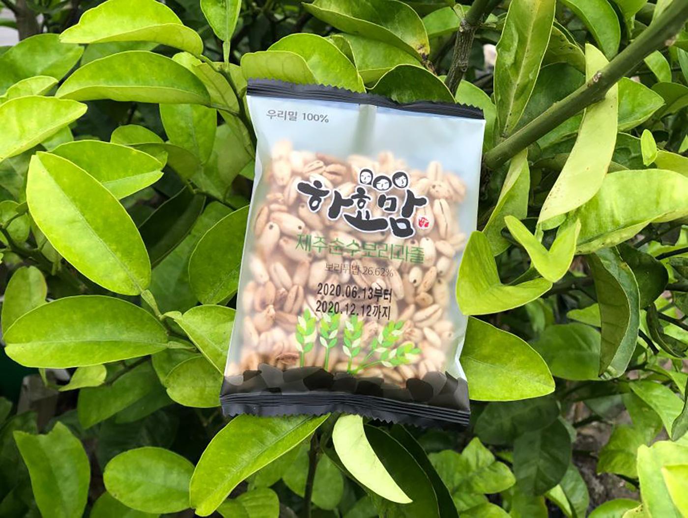 제주 보리과즐/청정 우리밀 100% 제주 전통 과자(35g*8개입)  상세이미지1