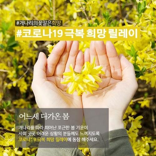#개나리의꽃말은희망, #코로나19 극복 희망 릴레이 리그램 보도기사 사진