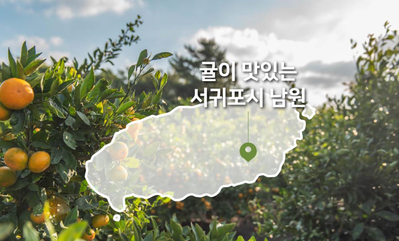 제주 극조생감귤 5kg/농림축산식품부 인증! 10월~2월에만 맛볼 수 있는 제주 감귤 상세이미지4