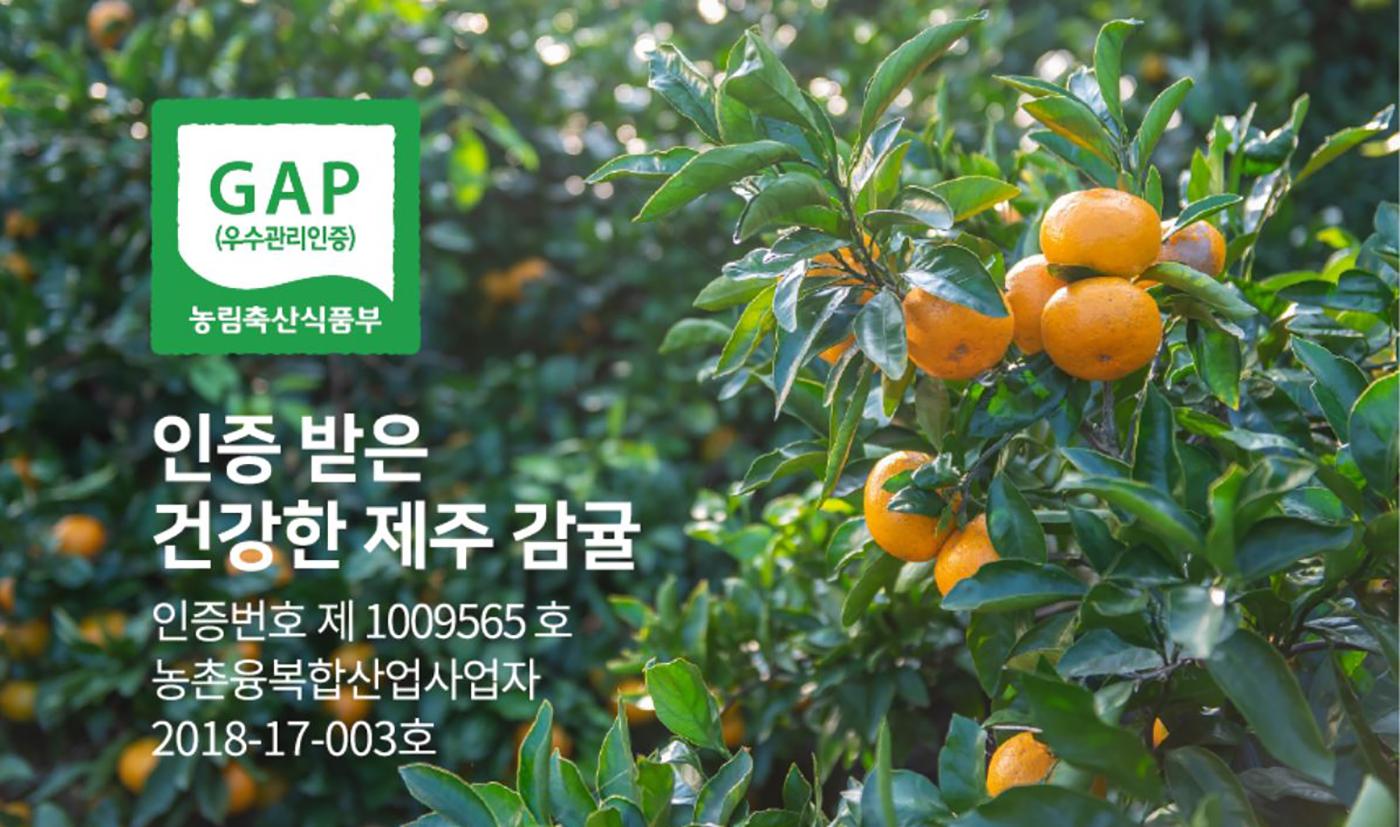 제주 극조생감귤 5kg/농림축산식품부 인증! 10월~2월에만 맛볼 수 있는 제주 감귤 상세이미지2