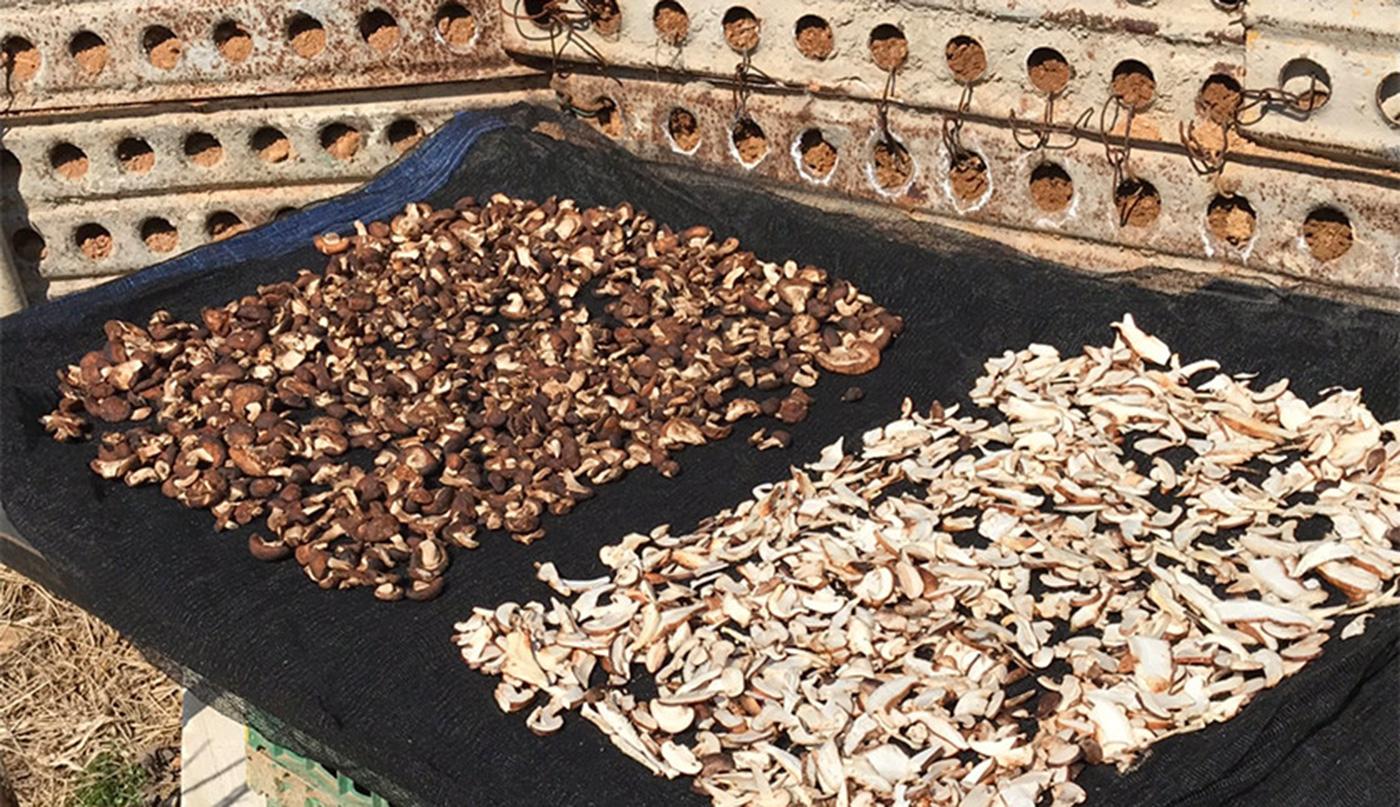 시흥 표고버섯 3종 선물세트 상세이미지2