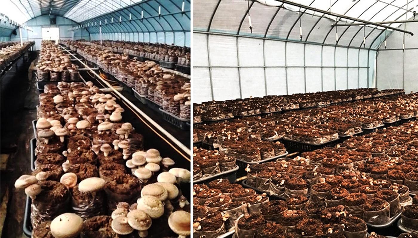 시흥 표고버섯 3종 선물세트 상세이미지1